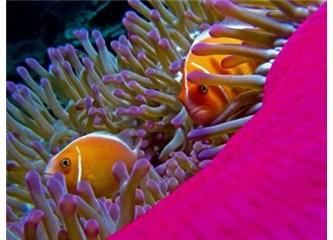 Denizaltı canlılarındaki muhteşem kamuflaj