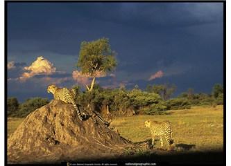 Hyde Park Afrika