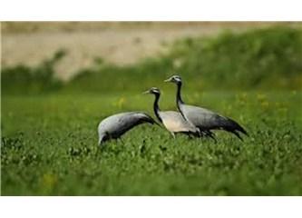 Muğla'nın Seydikemer ilçesine bağlı Girdev yaylası'nda, kuşlar kaderine bırakıldı