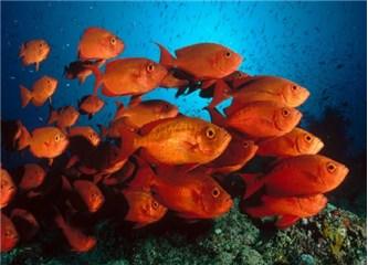 Balıkların maksimum yüzme hızına neden ulaşılamıyor?