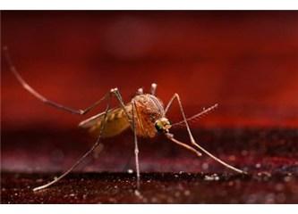 Bir yaratılış Mucizesi: Sivrisinek- 1 Resimler