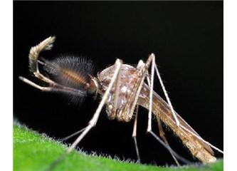 Bir yaratılış Mucizesi: Sivrisinek -2