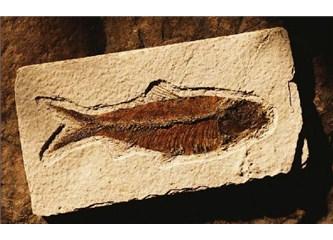 Fosiller neden evrim teorisini yerle bir eder?