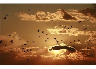 Kuşlar neden göç ederken gece yolculuğunu seçer?
