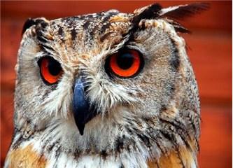 Kuşların keskin görüşe sahip gözleri, Resimler