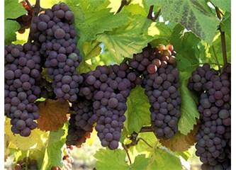 Çanakkale Şarap ve Kanyak Fabrikası Nasıl Kapatıldı?