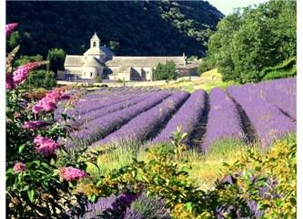 Saint Remy de Provence'da 1 gün!
