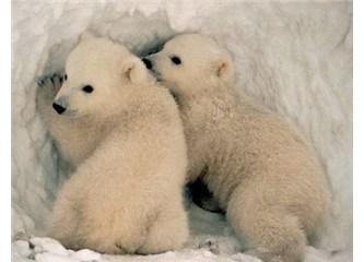 Kış uykusuna yatan hayvanlar nasıl ölmez?