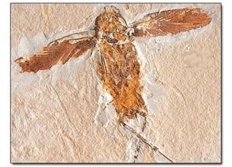 Evrimcilerin ilkel böcek hayali…