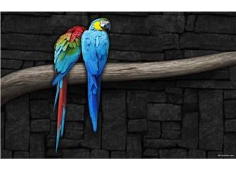 Bakkal ve Papağan