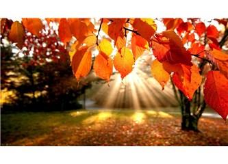 Sonbahar dedikleri. 1 :  Mevsime Giriş