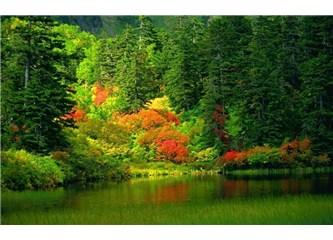 Ormanın önemi