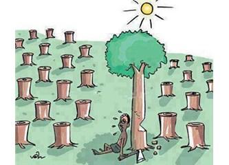ODTÜ, AKP ve İğde Ağacı...