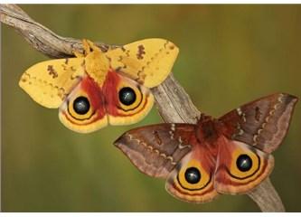 Kainattaki uyum ve simetri evrimle açıklanamaz