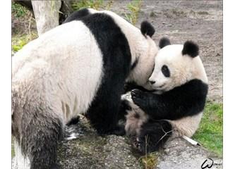 Hayvanlar arasındaki sevgi ve fedakârlık evrimle açıklanamaz!