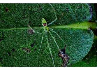 Gülen örümcek!