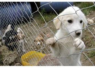 Hayvan barınaklarına hükümet yardım etmeli