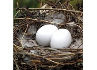 Kuş yumurtalarındaki mucize!