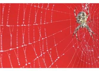 Örümceklerin ipeği çelikten daha sağlam!