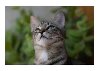 İlginç kedi davranışları