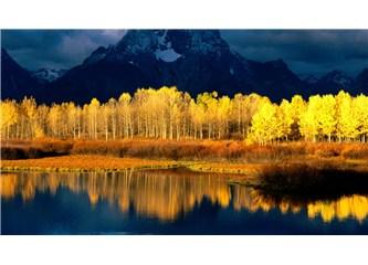 Sonbahar sarısı...