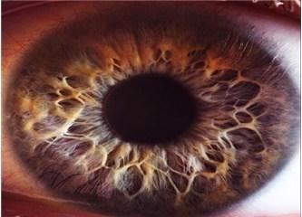 Sadece gözün yapısı evrim teorisini çürütmeye yeterlidir…