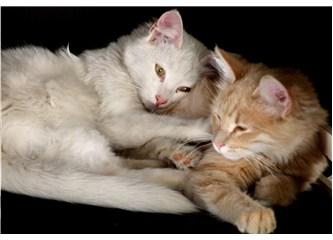 Kedileri Zehirliyorlar...