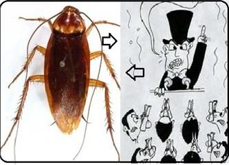Hamam böceği ve siyasetçi