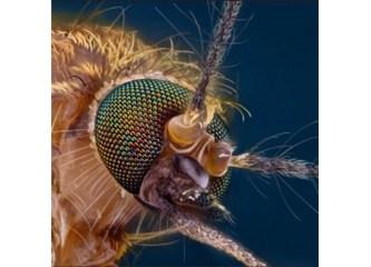Kuran'da adı geçen bir hayvan; sivrisinek 2