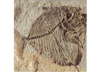 350 milyondan fazla fosil evrimi yalanlıyor!
