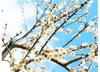 """Bir sanat olayı: """" K.Yaka'ya İlkbahar erken geldi"""""""