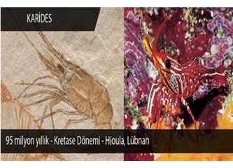 Geçmişin izleri, evrimi yıkan fosiller, Resimler