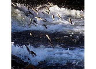 Uçan balıkların dansı başladı