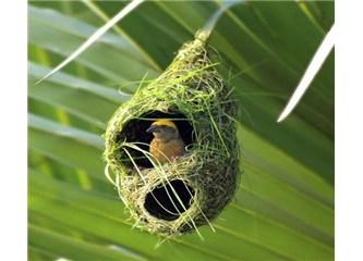Küçücük bir kuş tek başına böyle bir yuvayı nasıl yapar?
