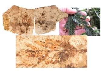 Yüzbinlerce çeşit bitki evrimle meydana gelmez...
