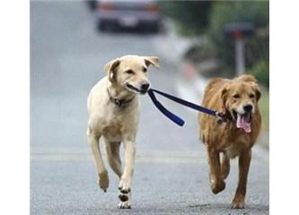 Köpek taşlaması 2