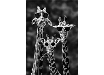 Güneş gözlüğü ve gözlük üzerine...