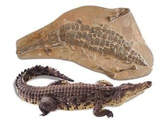 """Milyonlarca yıllık fosiller """"evrim yok"""" diyor! Resimler"""