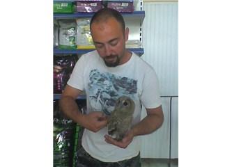 Veteriner dükkanında baykuş