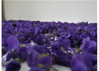Biyomedikal bitkiler- III, Menekşe