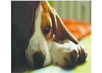 Barınak Köpeğiydi, O, Şimdi Bir Dergide Köşe Yazarı...