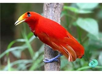Muhteşem taklit yetenekleri olan kuşlar!