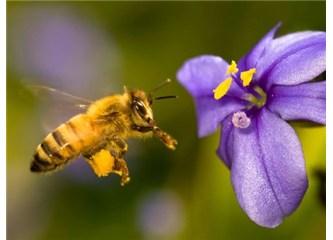 Bilgisayardan hızlı problem çözen arılar, Resimler