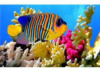 Teknolojiye ilham kaynağı olan deniz canlıları