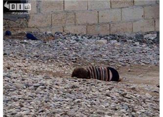 Gazze'den fotoğraf alt yazıları