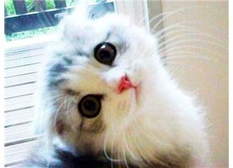 Kediler; tansiyona, dengesizliğe, ruhsal bunalıma, sıkıntılara, birebir.  Negatif enerji çekerler.