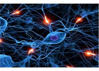 Vücudun her hücresine dönüşebilen kök hücreler, Resimler