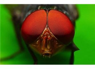 Hayvanların gözlerindeki yaratılış mucizesi
