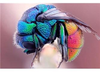 Böceklerdeki muhteşem yaratılış evrimcileri köşeye sıkıştırıyor