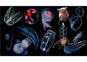 Planktonlar bulutların oluşmasına katkıda bulunuyorlar